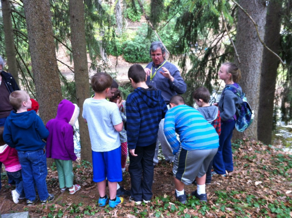 Finding owl pellets. Our guide explained this stand of spruces is a favorite roosting place for great horned owls.