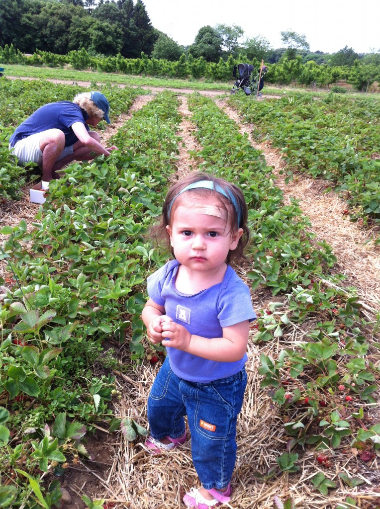 Lucy goes strawberry picking