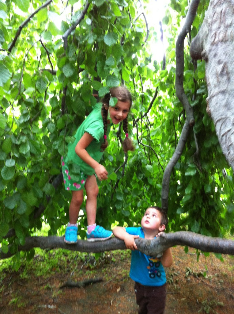 Sophie climbs a weeping beech at Gore Place