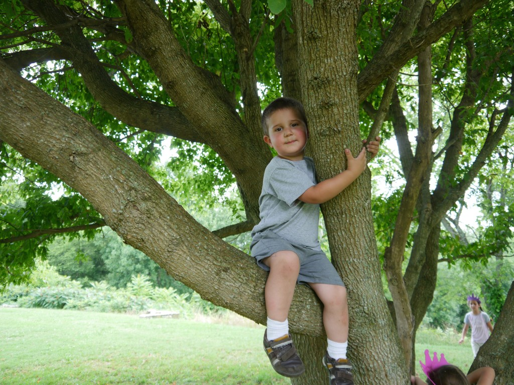 Anthony in a tree on Ferry Farm, George Washington's boyhood home.
