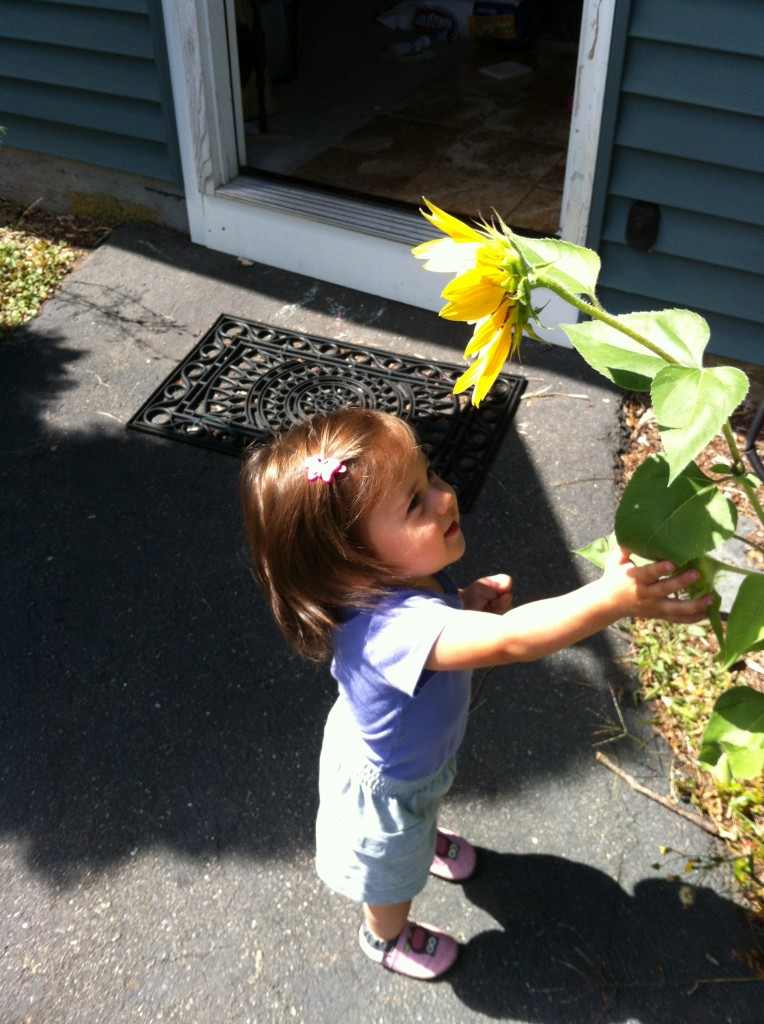 Lucy with a sunflower