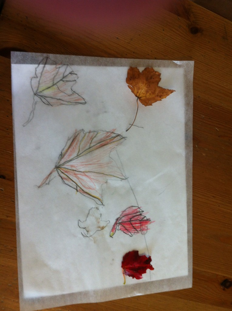 Sophie's leaf tracing