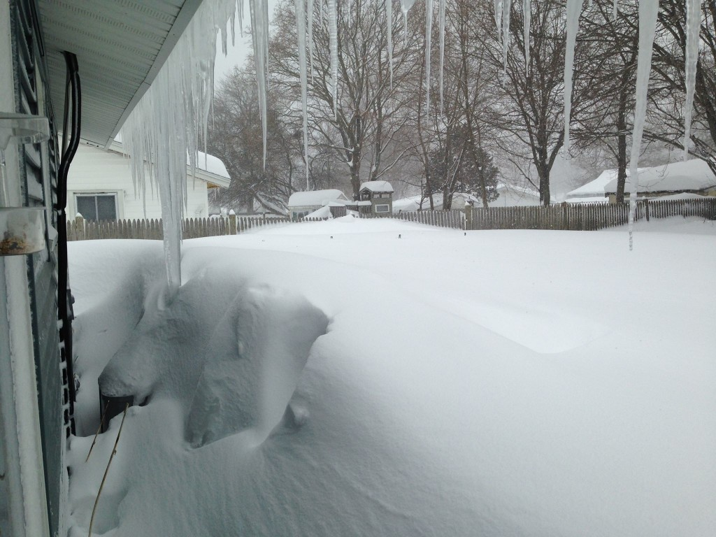 Backyard. The trellises are almost covered. The fence is almost covered.