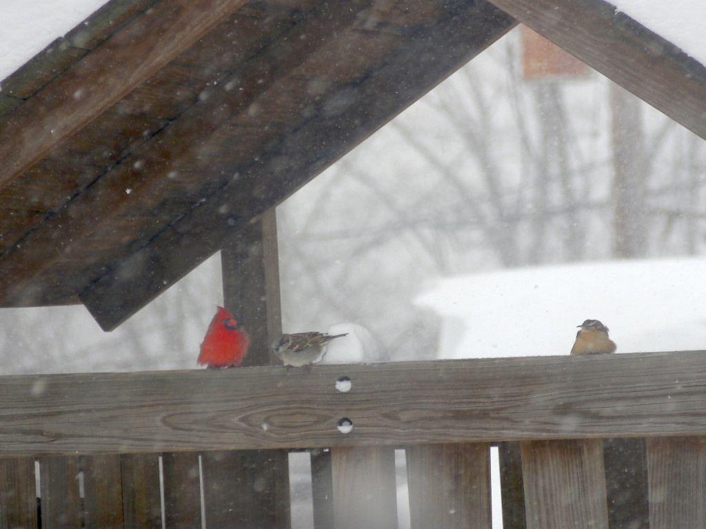 A cardinal, a sparrow, and a wren perching on the playhouse.