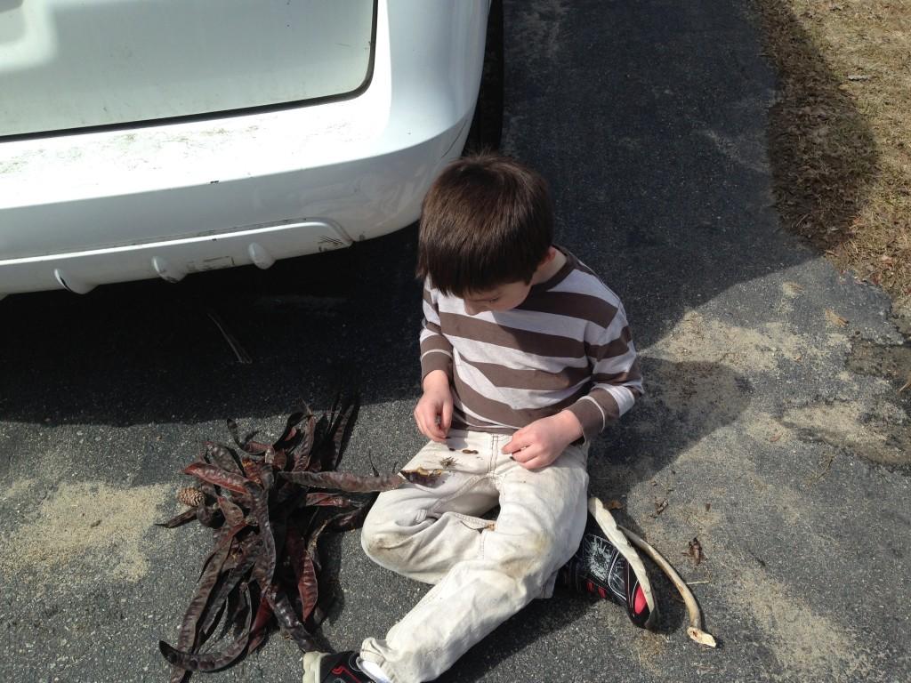 Ben plays with honeylocust seed pods