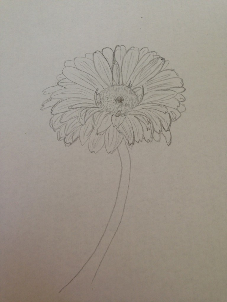 My sketch of one of the anniversary flowers.