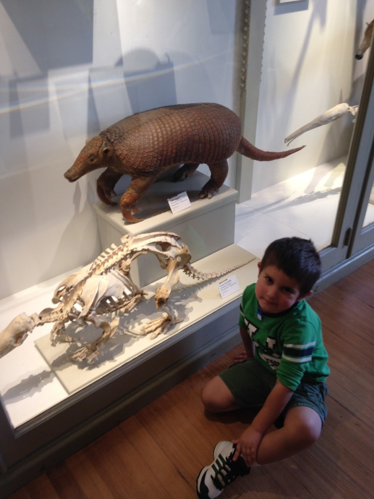 "Anthony adores the armadillo: ""Look there's an armadillo and a skeleton!"""