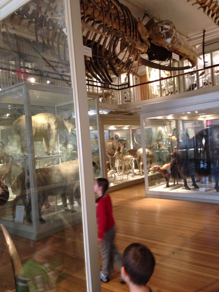 The Great Hall of Mammals.