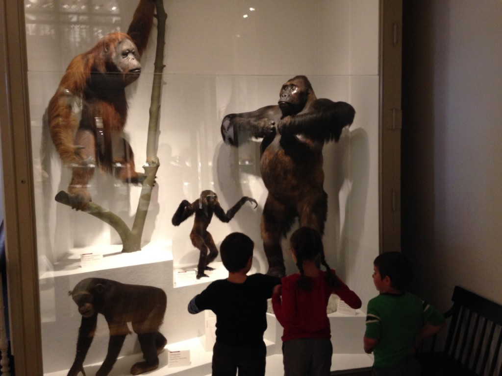 Kids imitate gorillas.