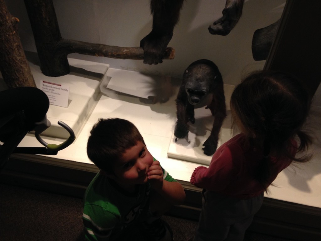 Anthony adored the baby gorilla. Gorillas are a special fascination for him. He reminds me so much of Bella at the same age, her love was penguins.