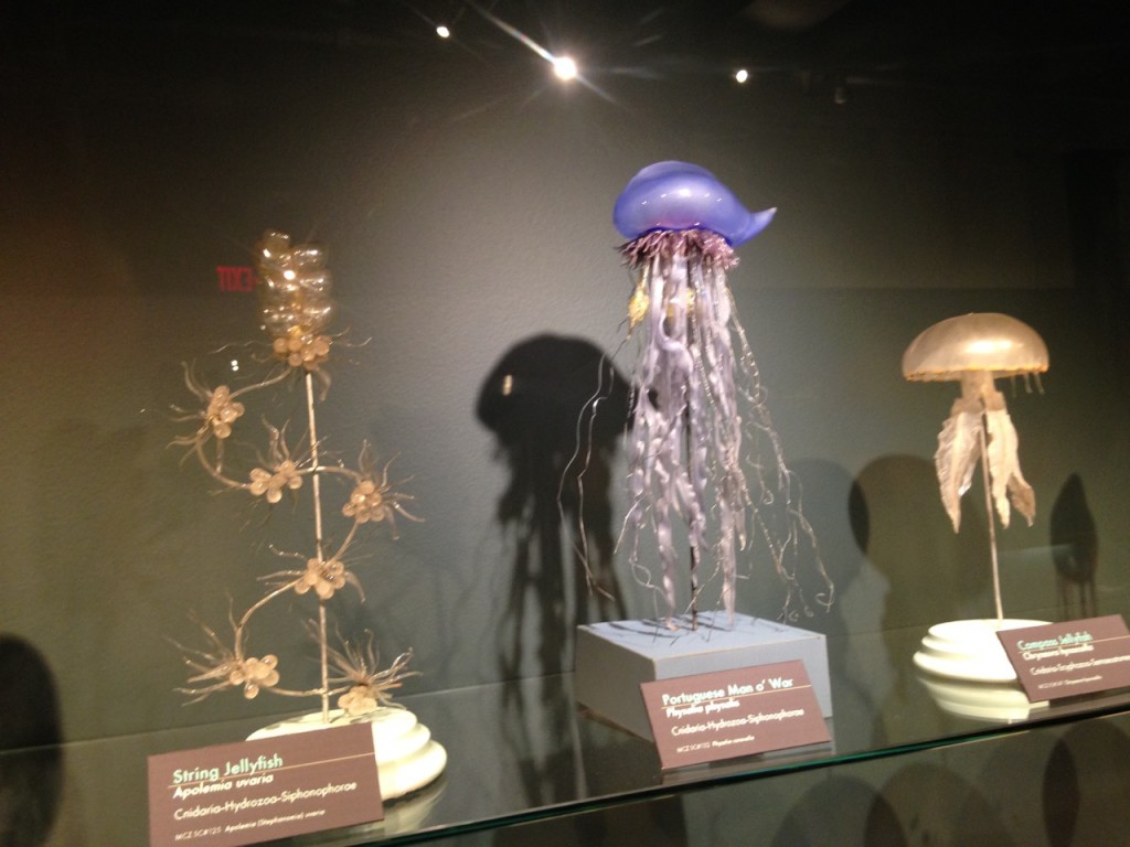 Glass jellyfish.