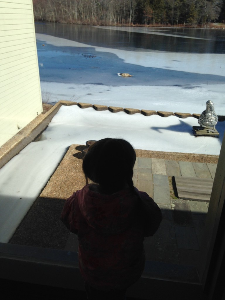 Lucy looks at the frozen pond.