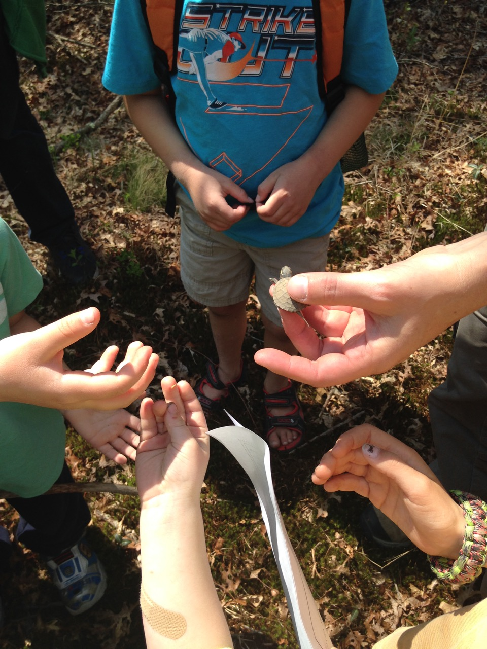 A baby painted turtle was the highlight of our nature walk.