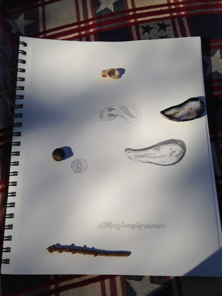 Drawing shells and twigs.
