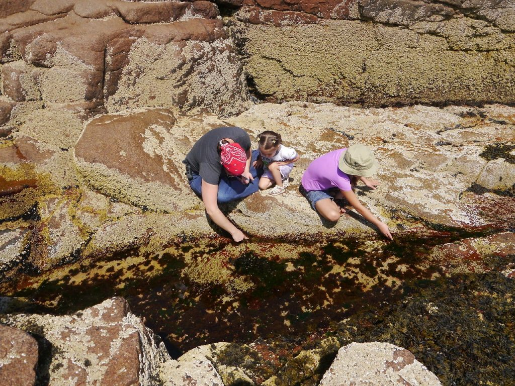 Exploring tide pools. Just wait and watch and you'll see things moving.
