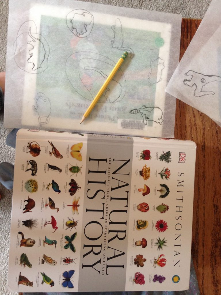 Tracing animals in the Natural History book.