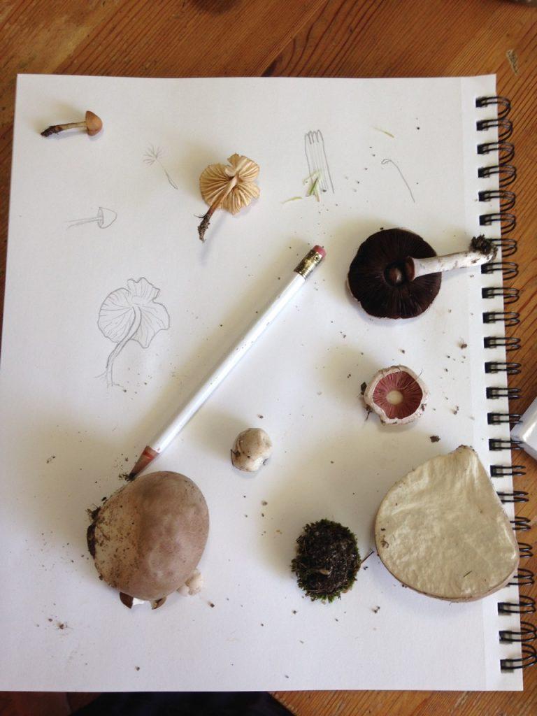 Sketching fungi