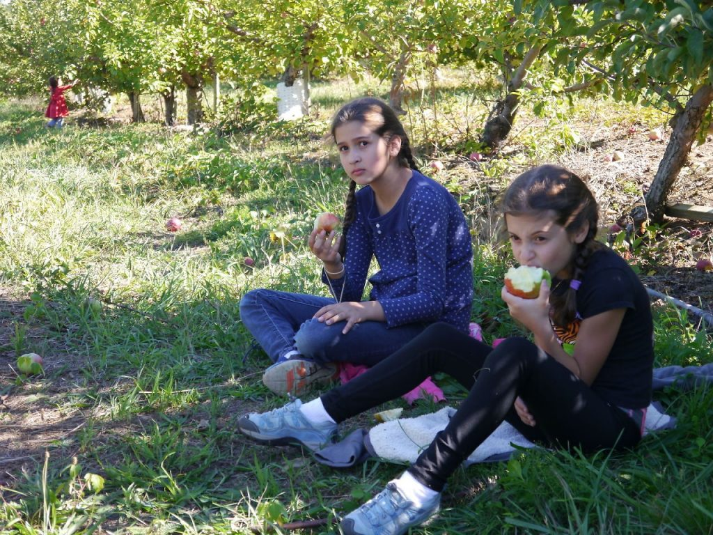 Apple picking at Berlin Orchard